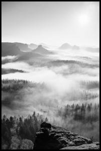 Foggy Forest Black & White I - 50x70 cm