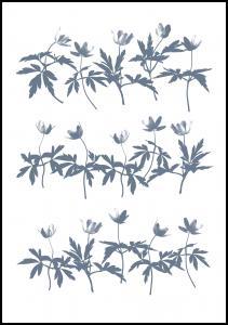 Wood Anemone Plakat