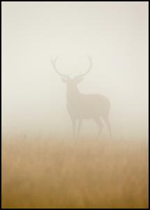 Ghost Stag Plakat