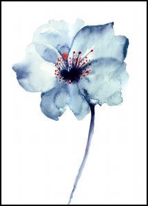 Aquarelle Flower - Blue Plakat