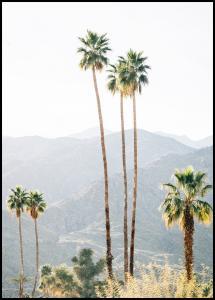Palm Trees I Plakat