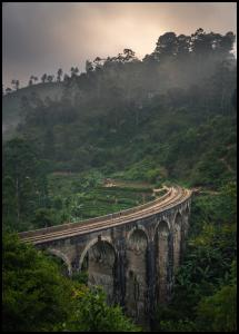 Jungle train rails Plakat