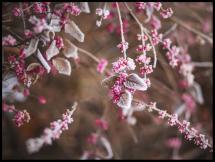 Blomst Nærbilde Plakat