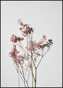 Dried flowers II Plakat