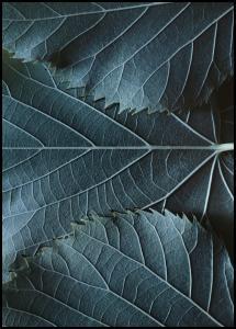 Blue Leaves Plakat