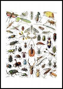Insekter II - Plakat