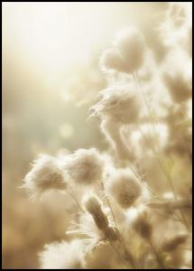 Fluffy flowers Plakat