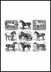 Hester - Plakat