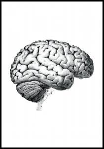 Hjerne - Plakat