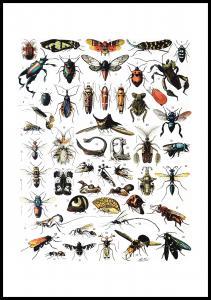 Insekter I - Plakat