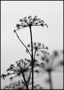 Black And White Flowers Plakat