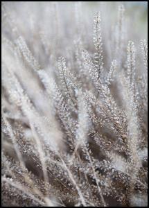 Frosty Grass Plakat