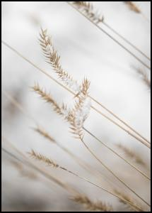Swaying Reed II Plakat