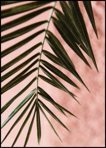 Pink pastell palm Plakat