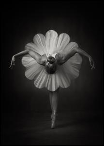 Floral Ballet Plakat