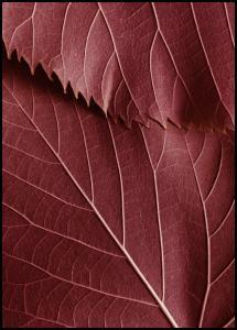 Red Leaves Plakat