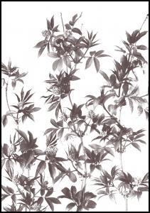 Branches Plakat