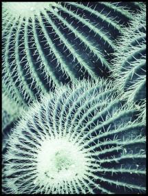 Round Cactus Plakat
