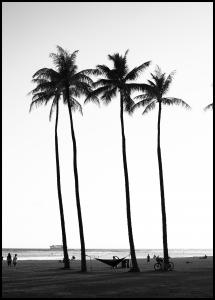 Black And White Palm Trees Plakat
